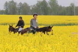Żółto nam w Młodzikowie